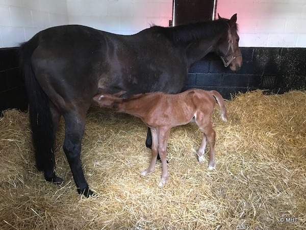 Astromagick_and_foal